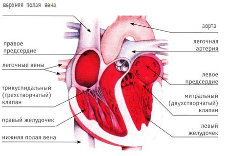 препараты лечение остеохондроза позвоночника